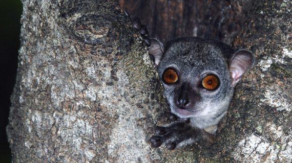 Parc National Lémurien