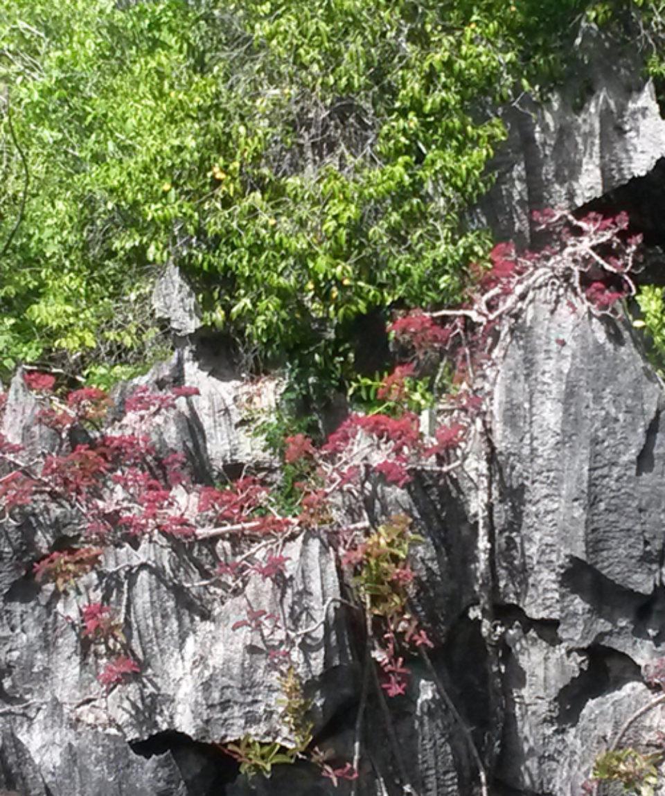 Tsingy de l'Ankarana