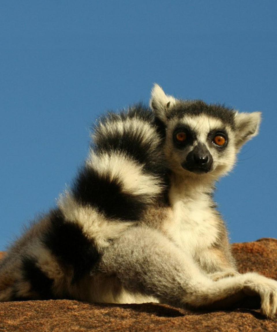 Réserve de Perinet - Paradis des Lémuriens