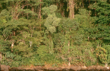 Forêt Luxuriante Est Madagascar