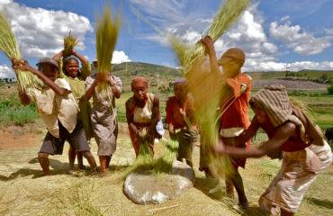 Fianarantsoa grenier à riz de Madagascar