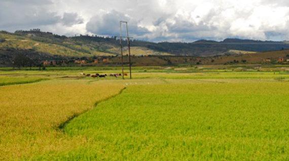 Sur la Route Antsirabe Miandrivazo